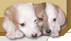 Vendita cuccioli di cani a Roma